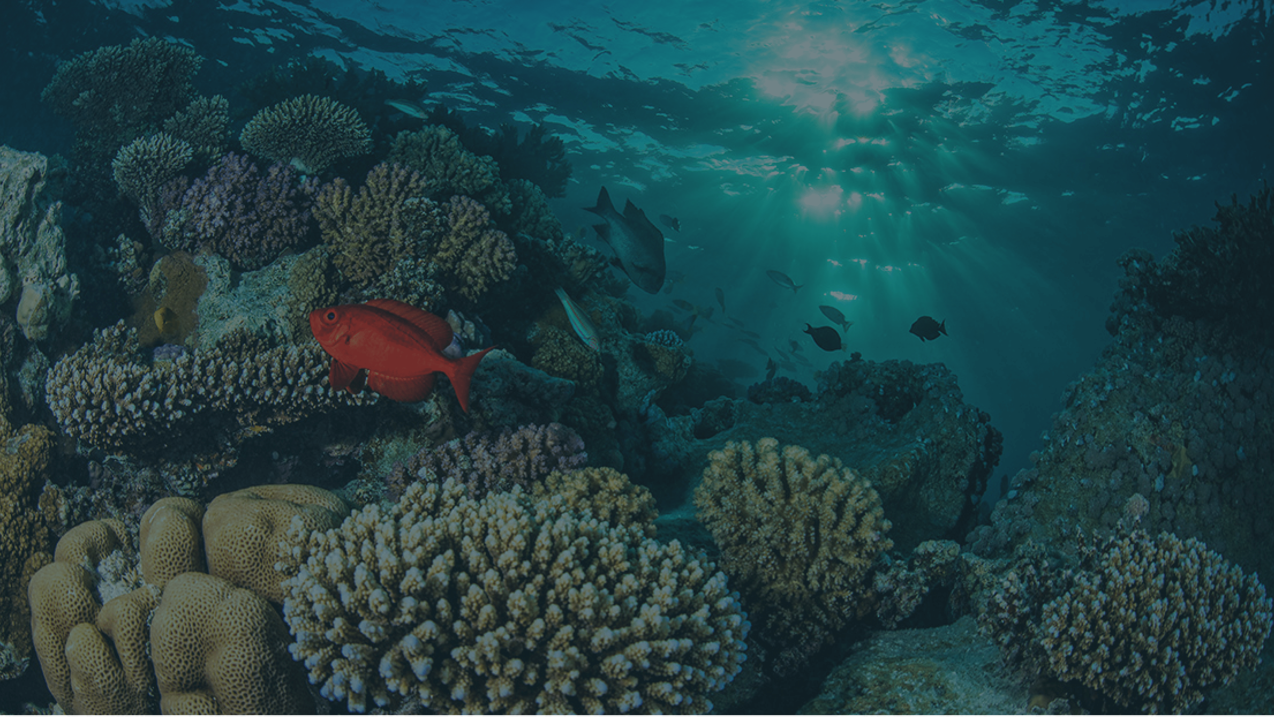 Coral Ocean Bed with fish